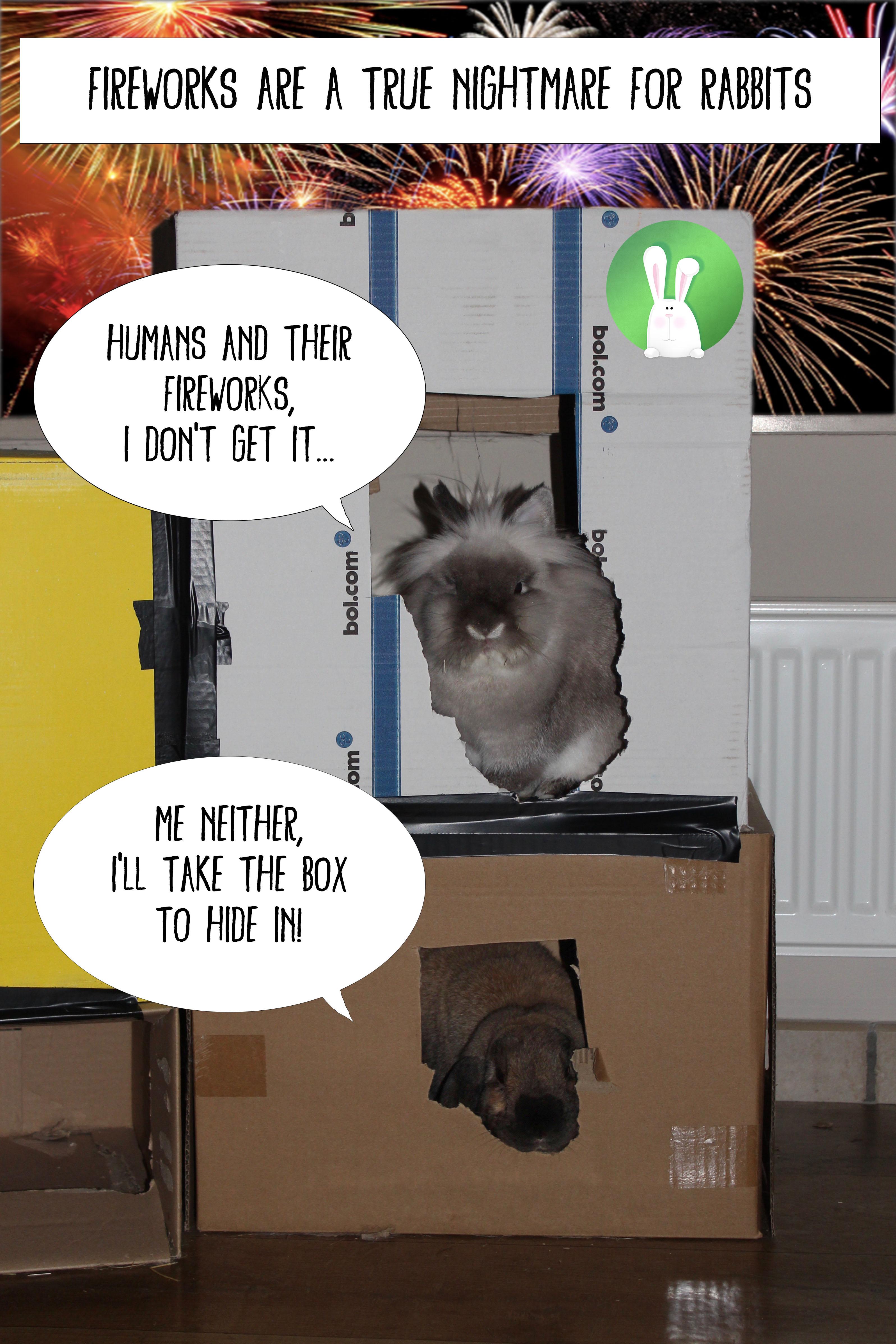 Rabbits and fireworks | Konijnenadviesbureau Hopster