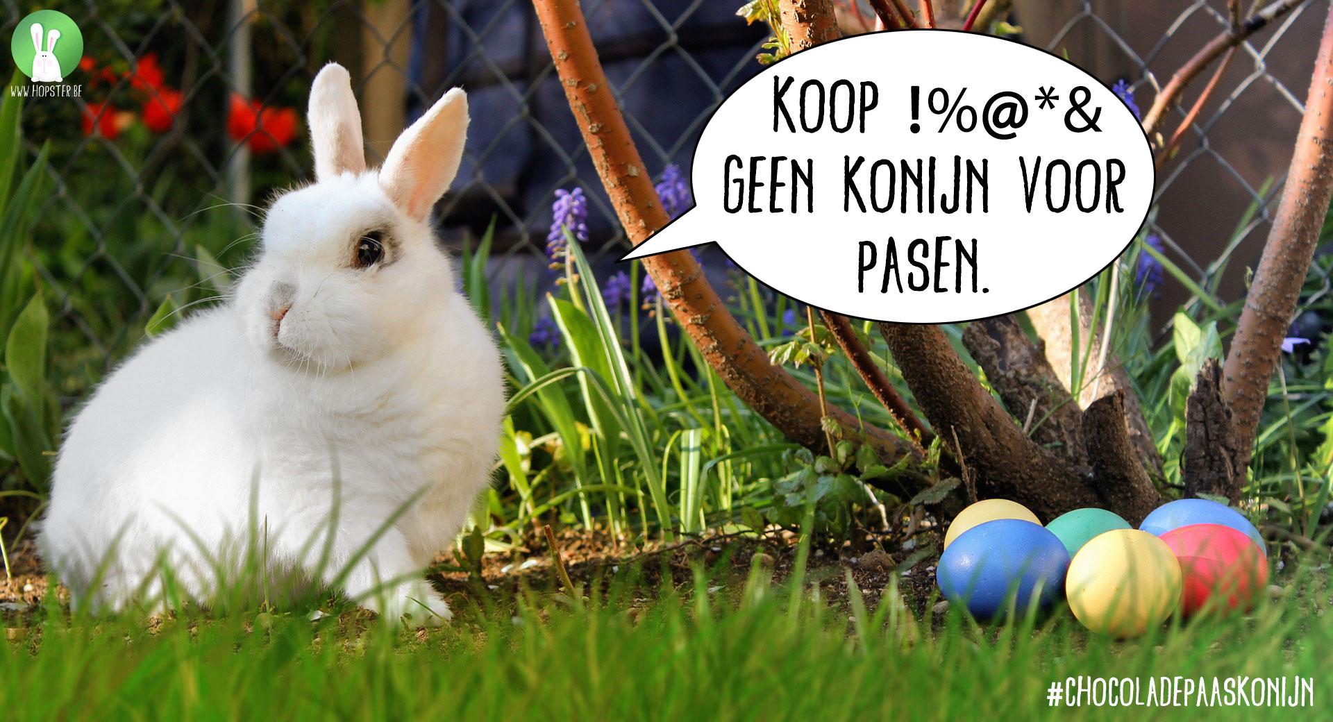Konijn kopen voor Pasen? | Konijnenadviesbureau Hopster