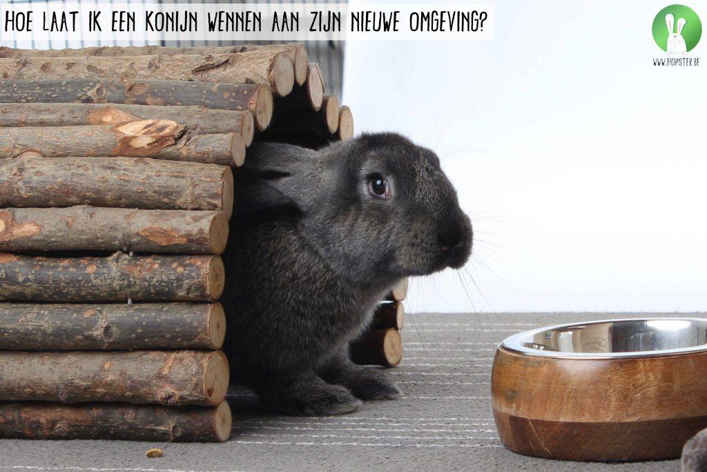 Hoe-laat-ik-een-konijn-wennen-aan-zijn-nieuwe-omgeving   Konijnenadviesbureau Hopster