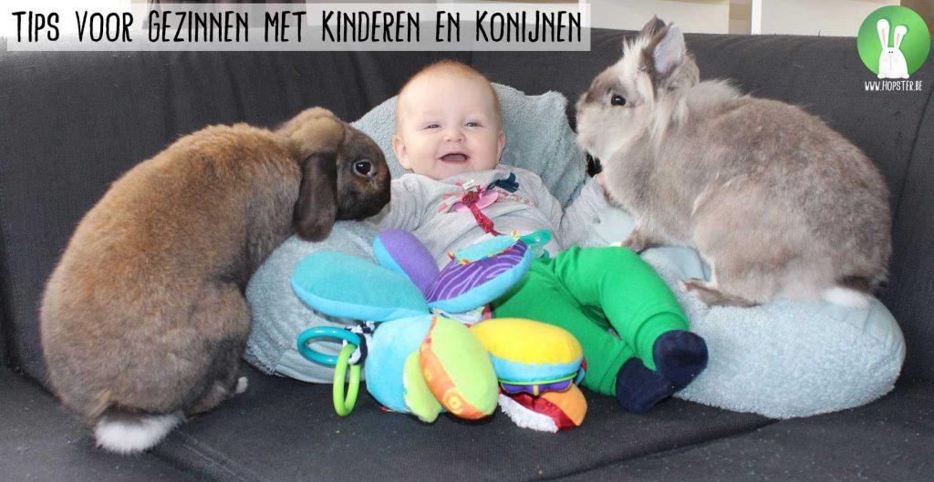 Tips-voor-gezinnen-met-kinderen-en-konijnen   Konijnenadviesbureau Hopster