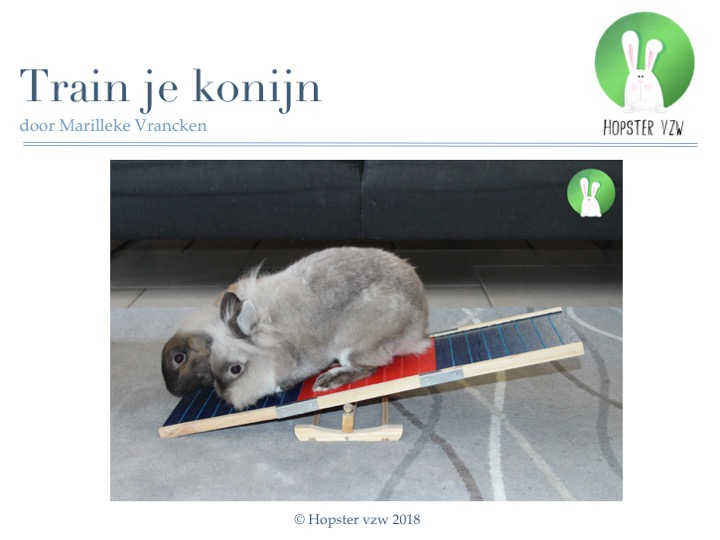 Train je konijn_2018 | Konijnenadviesbureau Hopster