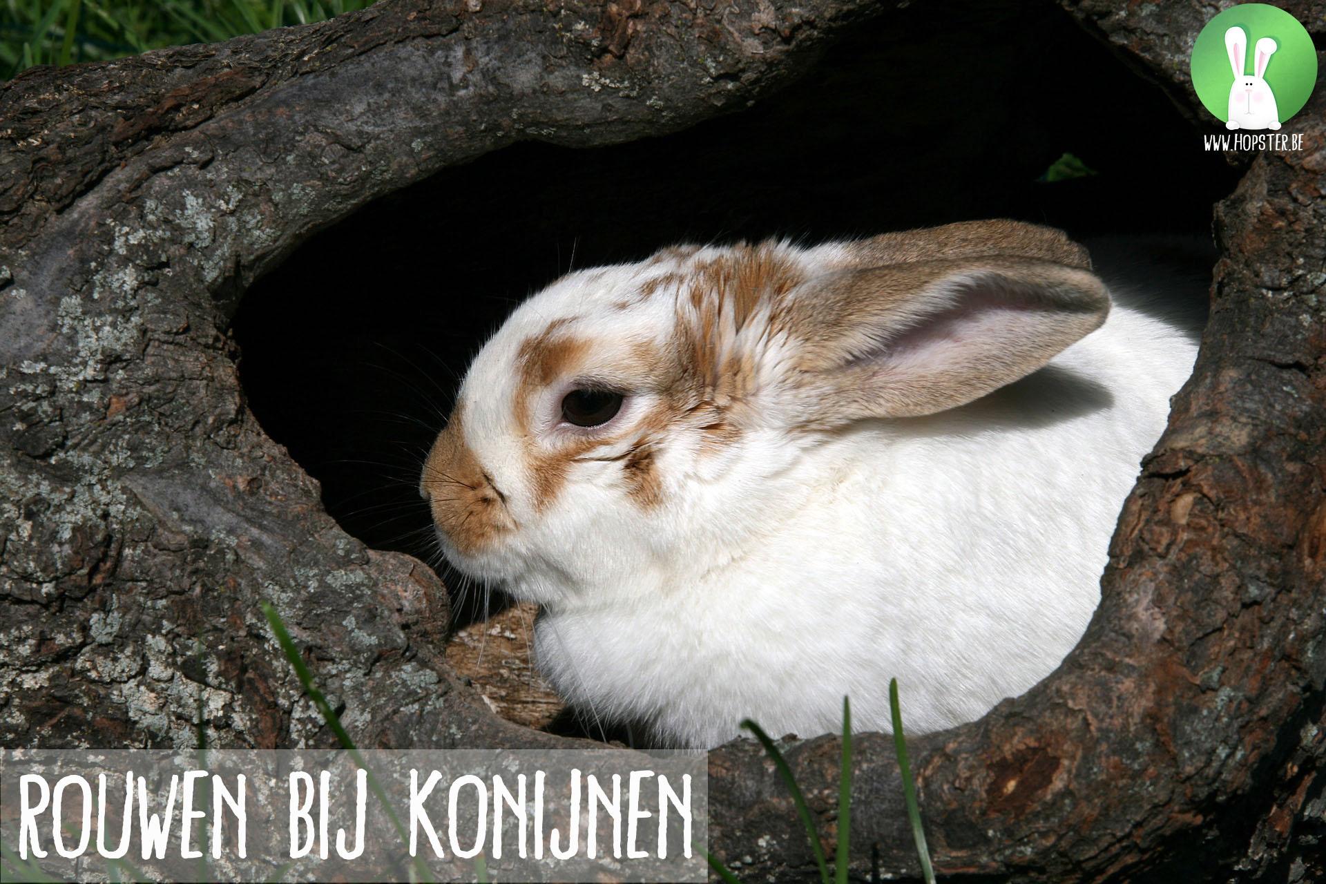 Rouwen bij konijnen | Konijnenadviesbureau Hopster