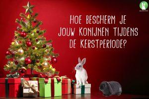 Hoe bescherm je jouw konijnen tijdens de kerstperiode | Konijnenadviesbureau Hopster