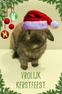 Vrolijk Kerstfeest | Konijnenadviesbureau Hopster