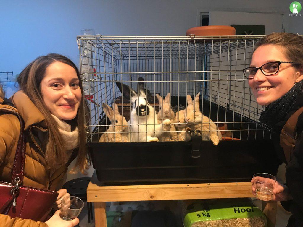 EHBO bij konijnen | Konijnenadviesbureau Hopster