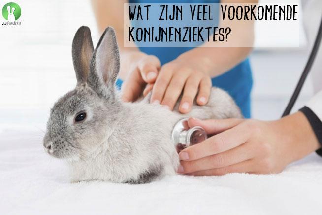 Wat zijn veel voorkomende konijnenziektes | Konijnenadviesbureau Hopster
