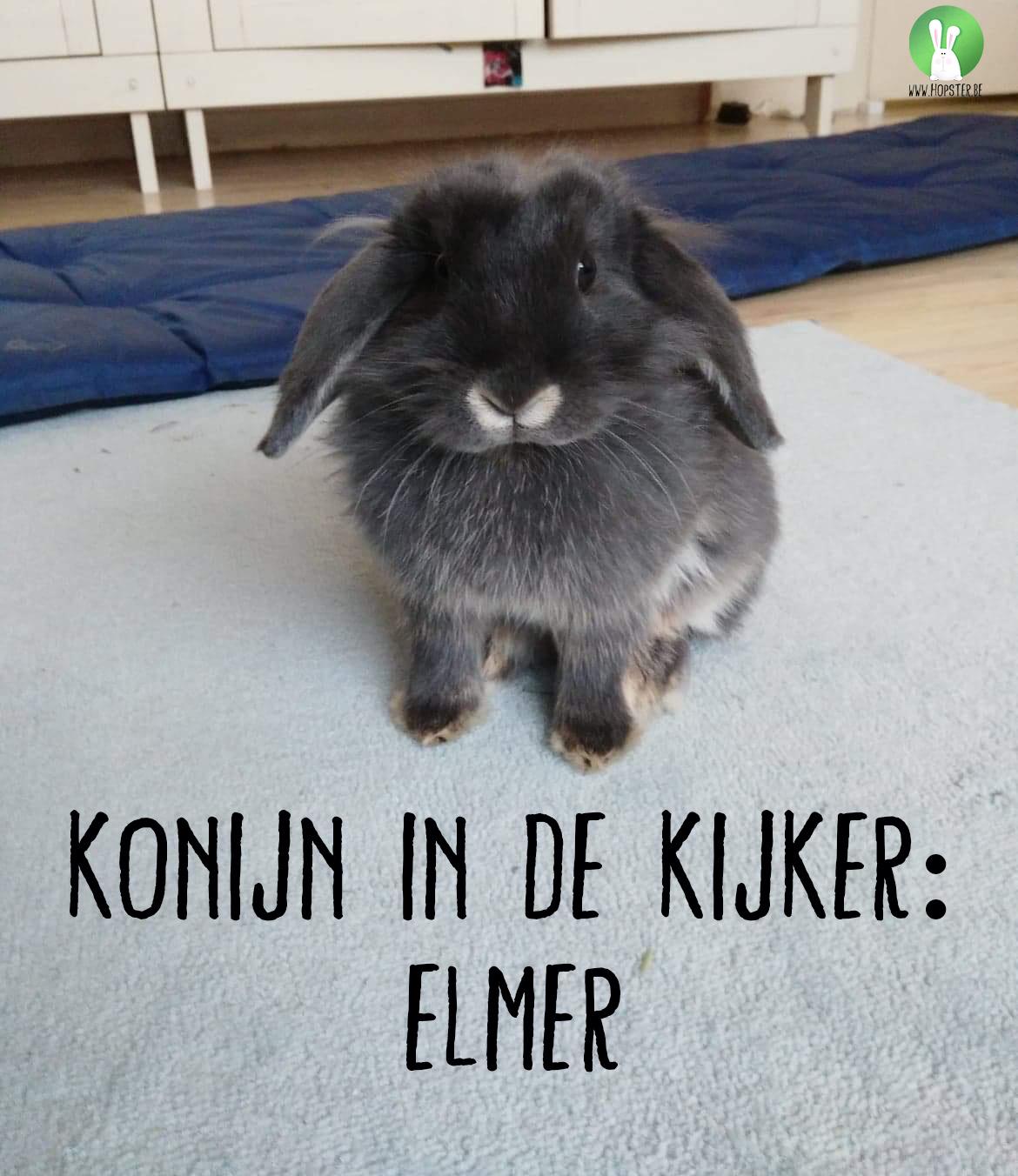 Konijn in de kijker: Elmer | Konijnenadviesbureau Hopster