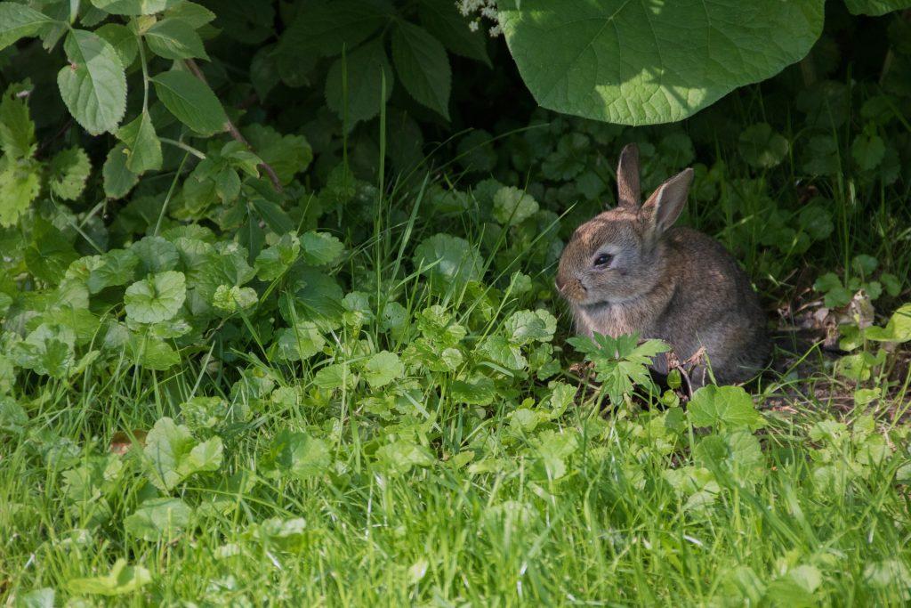 Hoe hou je konijnen koel in de zomer | Konijnenadviesbureau Hopster