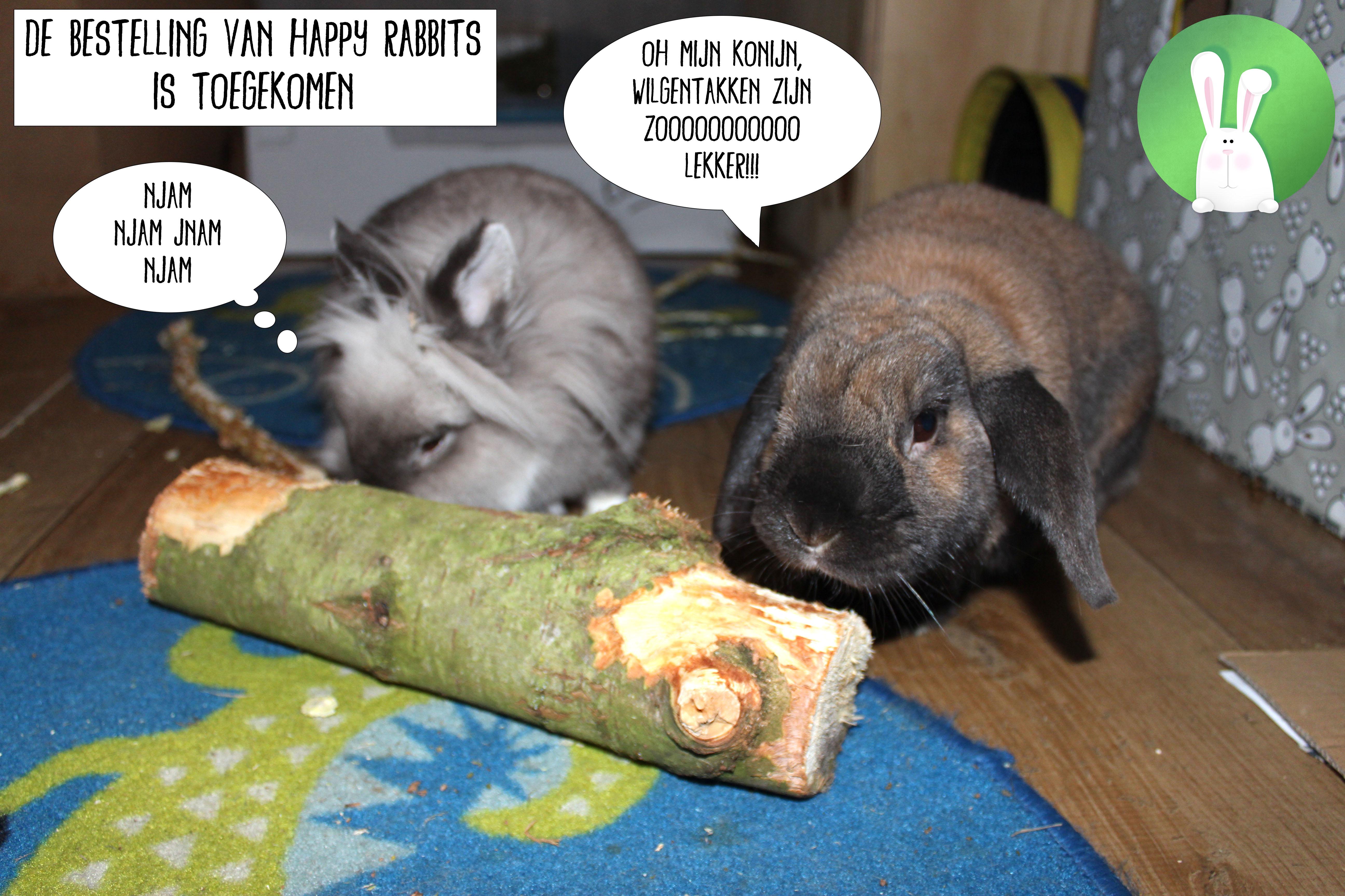 Eddie en Louis genieten van de wilgentakken van Happy Rabbits | Konijnenadviesbureau Hopster