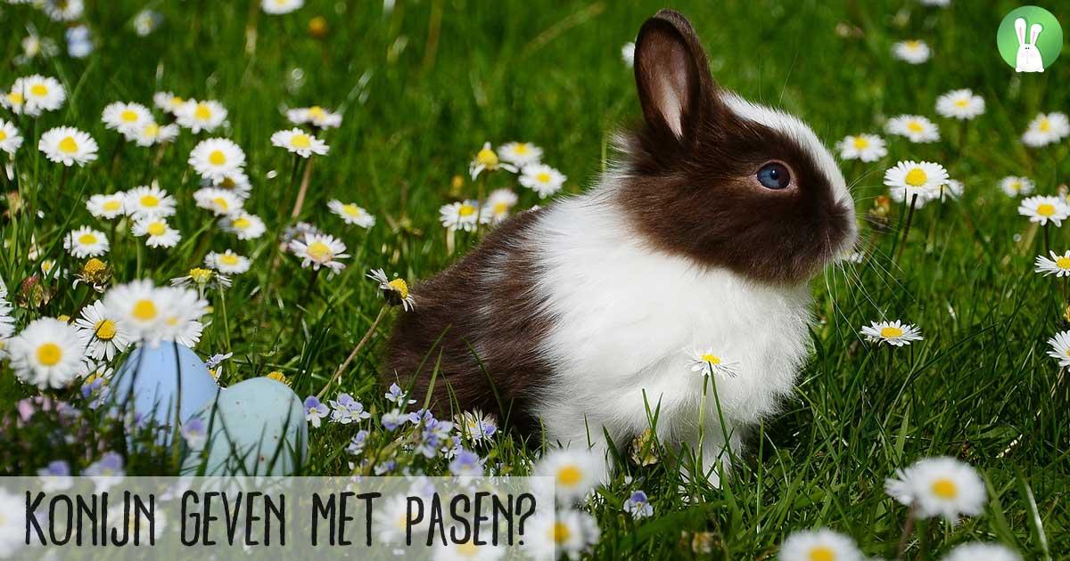 Konijn geven met Pasen? | Hopster vzw